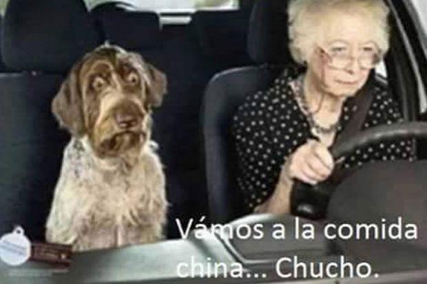 Memes Del Restaurante Chino Que Vendia Carne De Perro En Tijuana Tvnotas Irresist Fotos De Perros Graciosas Humor De Perros Imagenes Divertidas De Animales