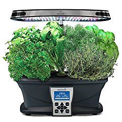 Growing Plants For Clean Air And More Gourmet Herbs 400 x 300