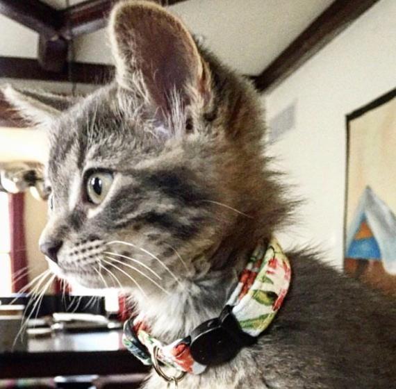 Colorful Hawaiian Print Cat Breakaway Collar, Tropical Pattern Cat Collar, Summer Cat Collar, Printe #tropicalpattern