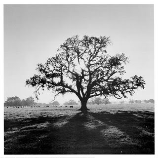 Favorite Ansel Adams print