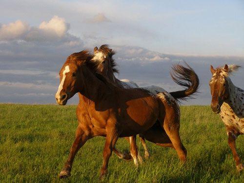 Mustang Horses Running Free | Pretty Horses | Pinterest ...