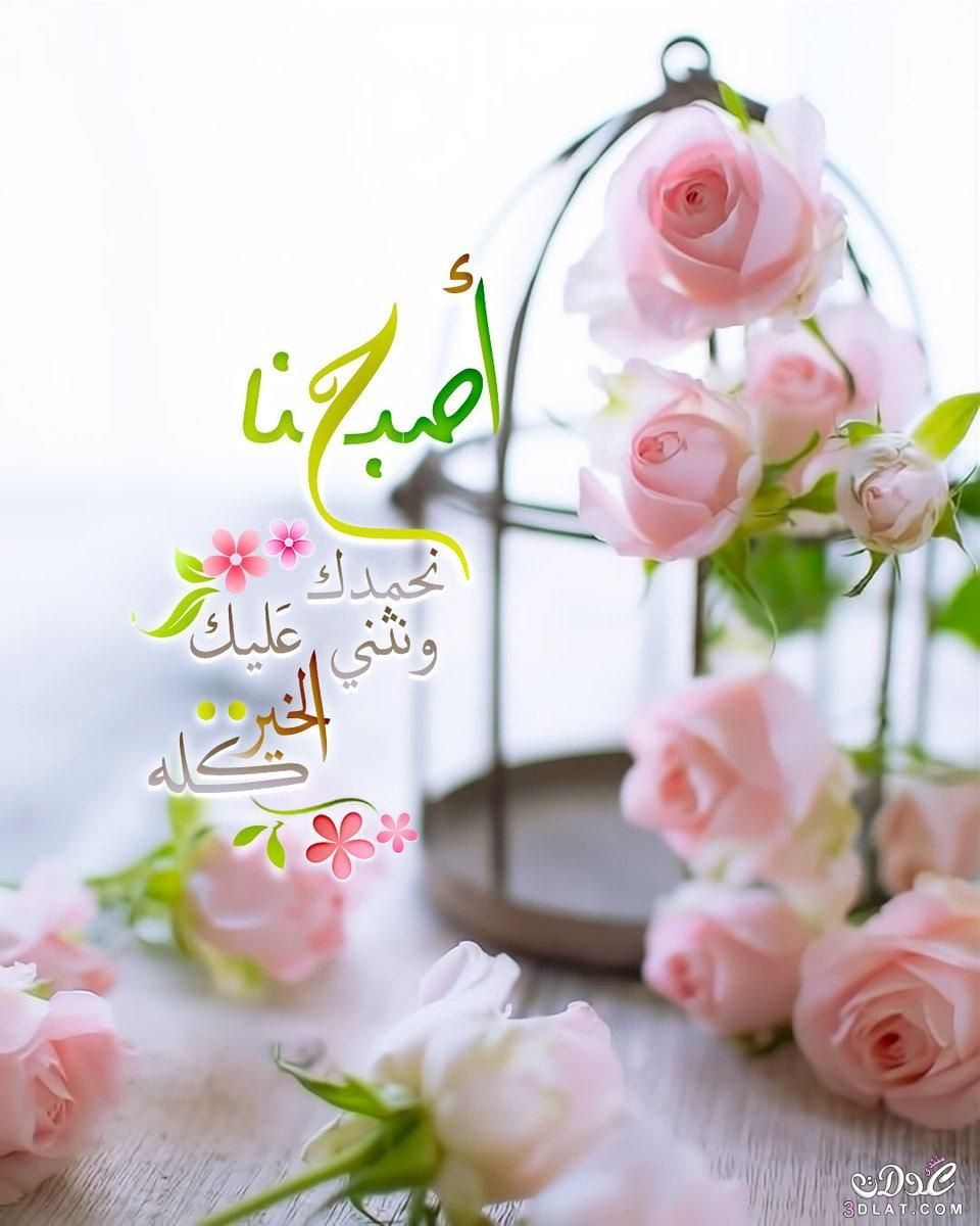 صور صباح الخير 2019 احلي الصور الصباحية 2019 أجمل صور صباحية جديدة 2019 Good Morning Flowers Rose Beautiful Morning Messages Morning Flowers
