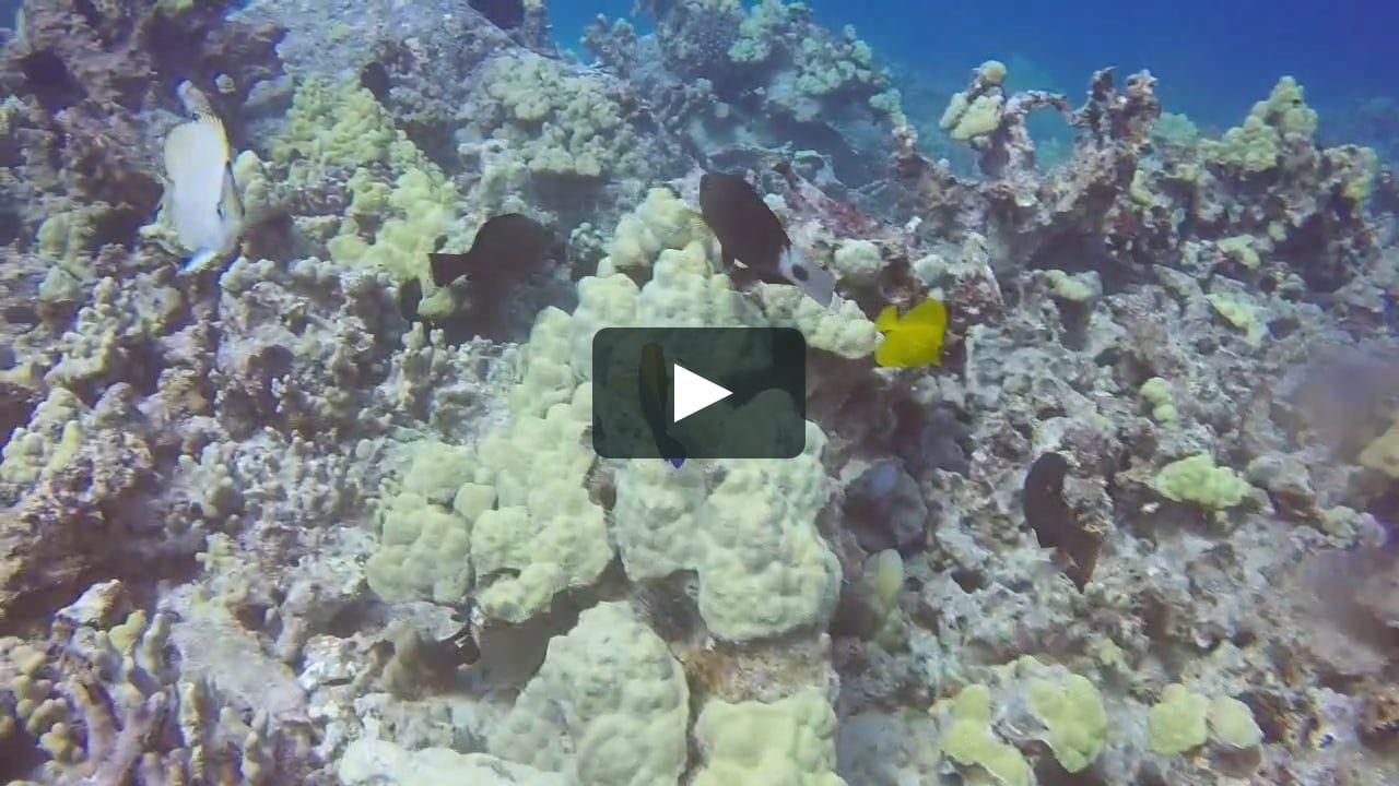 Puako Dive Hawaii - An alien world lurks beneath in this creepy cave diving video