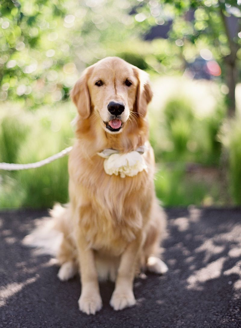 Golden Retriever With Flower Crown With Images Puppies Cute