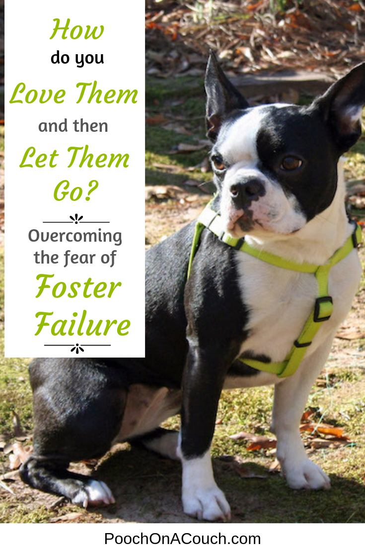 Fear Of Foster Failure Foster Dog The Fosters Dogs