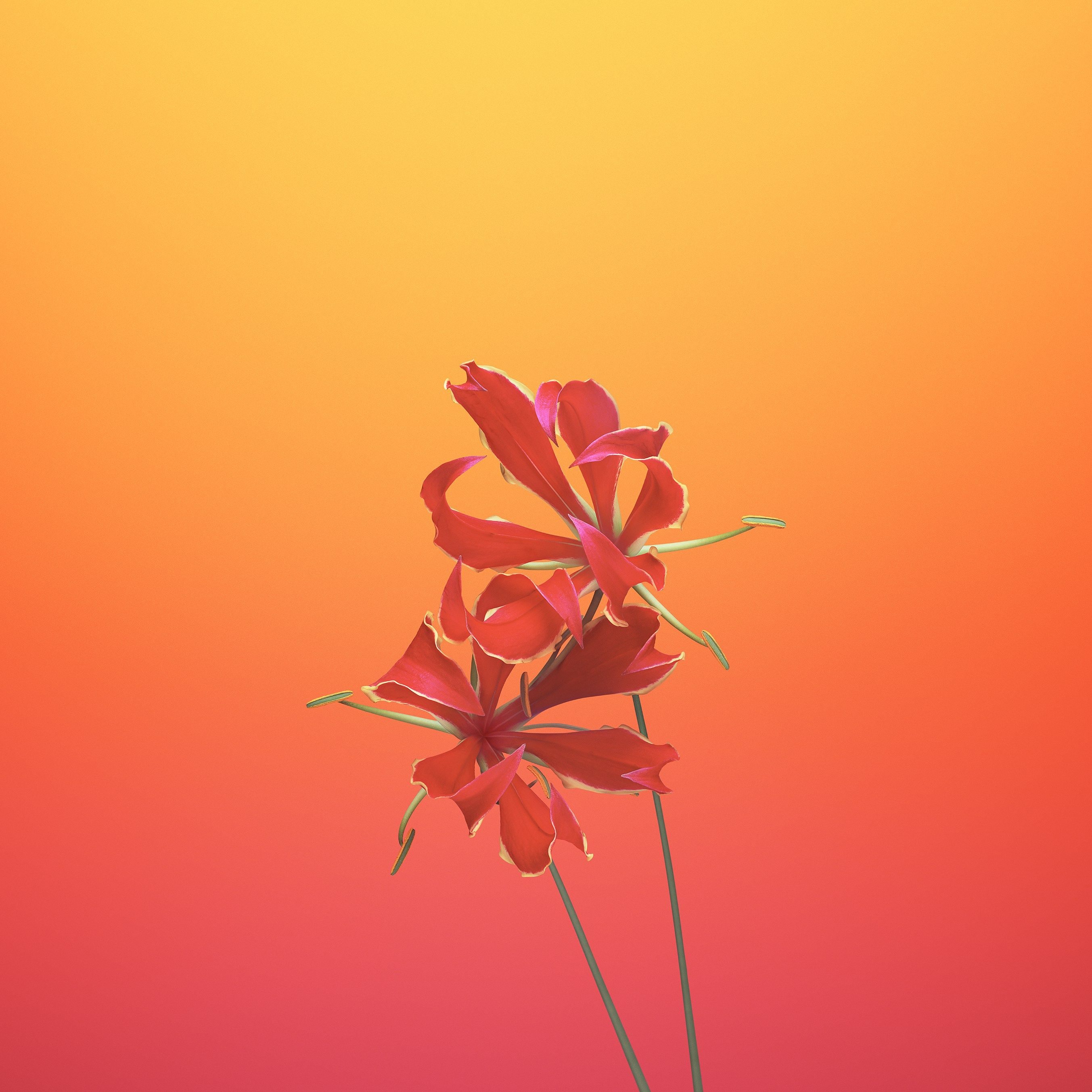 These 20 Gorgeous Ios 11 Wallpapers Will Pretty Up Your Phone Flower Iphone Wallpaper Ios 11 Wallpaper Apple Wallpaper