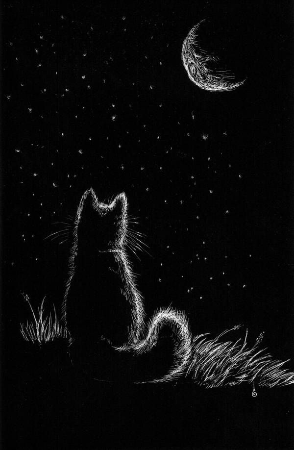Photo of Cat who loved the Moon by keysan on DeviantArt