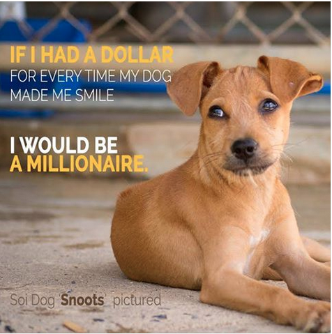 """""""If I had a dollar for every time my dog made me smile, I would be a millionaire.""""  SHARE if you agree!"""