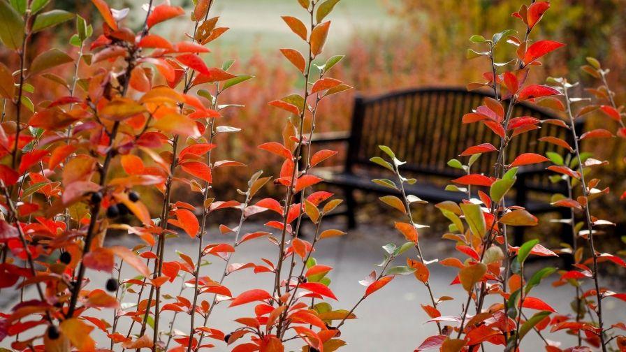 Autumn Park Bench Samsung Note5 Hd Wallpaper Download Hd
