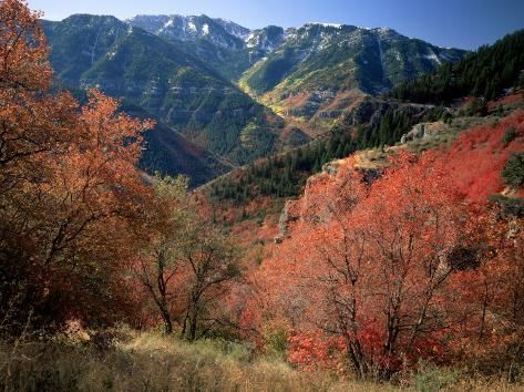 Photographic Print: Maples on Slopes above Logan Canyon, Bear River Range, Wasatch-Cache National Forest, Utah, USA by Scott T. Smith : 24x18in #utahusa