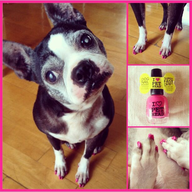 I Love Pet Head nail polish for you and your dog.