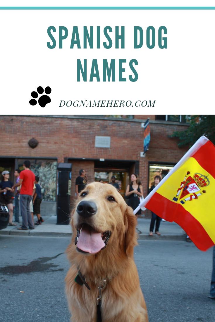 Spanish Dog Names Dog Names Dog Names Funny Dog Names Dog Names Male