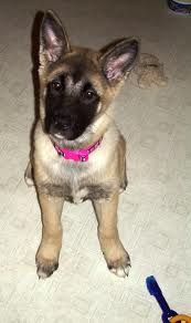 My Fav cutest pups