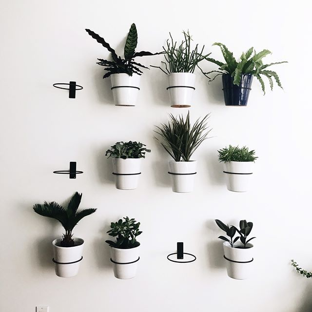 Wall Planter Hook Reviews Crate And Barrel Wall Planters Indoor Indoor Plant Wall Wall Plants Indoor