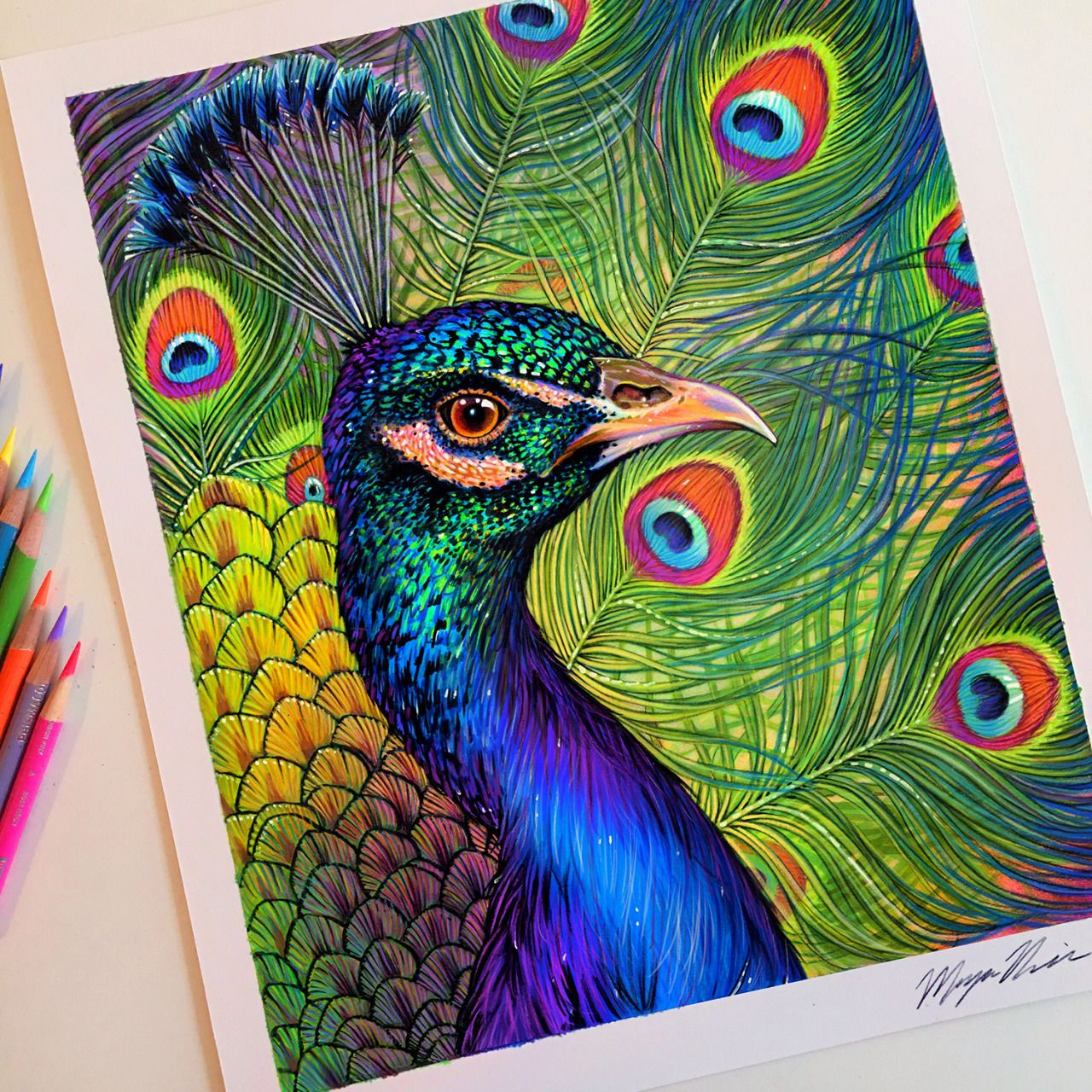 colored pencil peacock drawing artworks pinterest