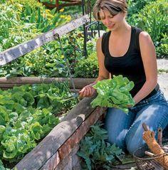 Photo of Die besten Salatsorten für jede Jahreszeit