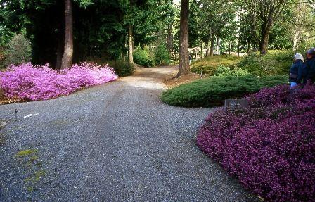 Rhody Bonsai Gardens Federal Way Weyerhaeuser Botanical Gardens Bonsai Garden Garden