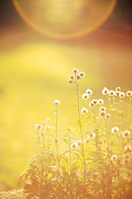 Light; Sunny: the sun is this photo is so bright against the little flowers, it represents the sunny day.