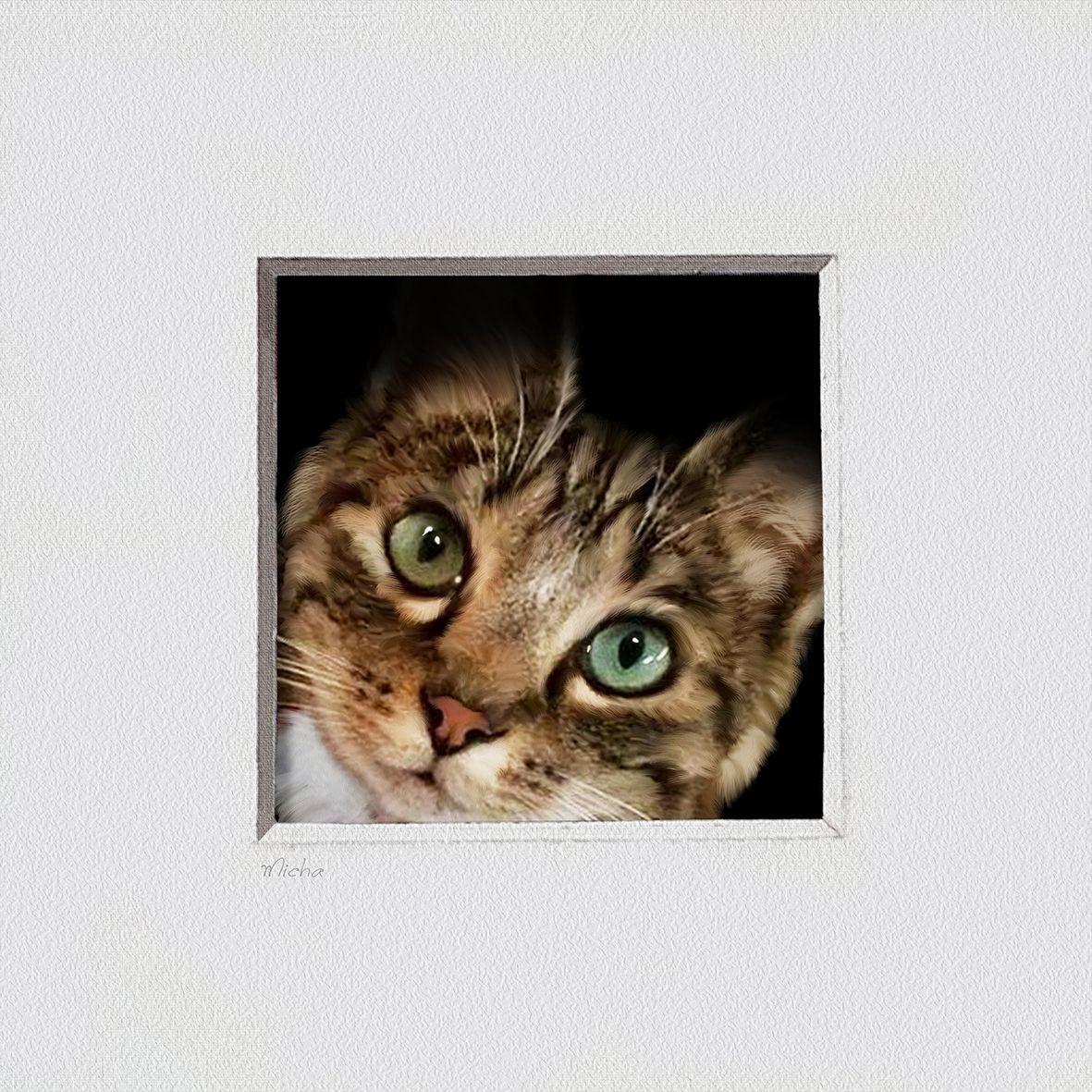 Your Cat En Trompe L Oeil Custom Pet Portrait From Photo Get A Pet Portrait Of Your Best Buddy Or Give It Animaux En Costumes Portraits D Animaux Et Peintre Animalier