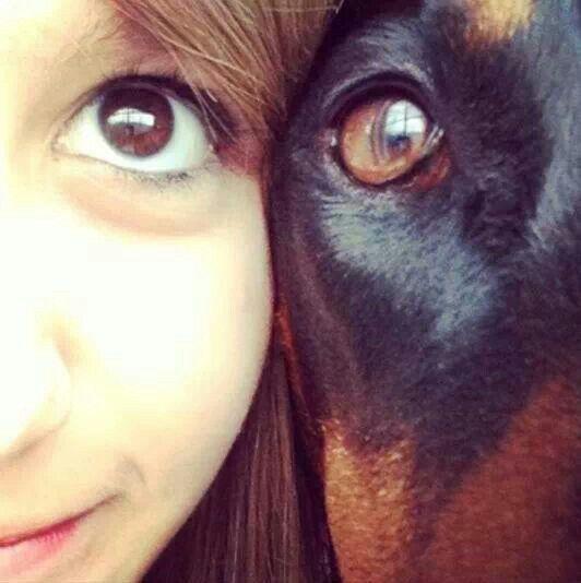 What A Fantastic Shot Dobermans Picture Dog Animales Y Mascotas