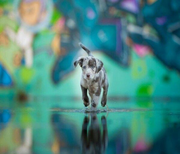 Run buddy! Cute animals, Leopard dog, Dogs
