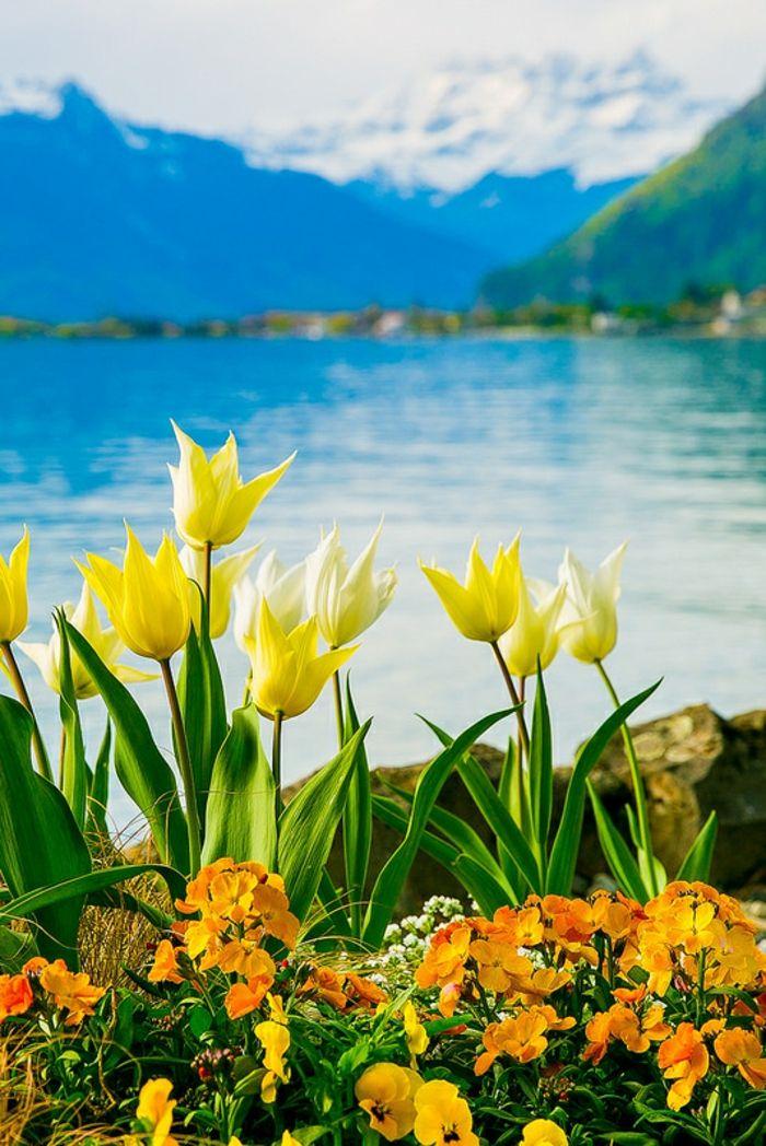 1001 blumenarten bilder und interessante fakten spring pinterest gelbe tulpen gebirge. Black Bedroom Furniture Sets. Home Design Ideas