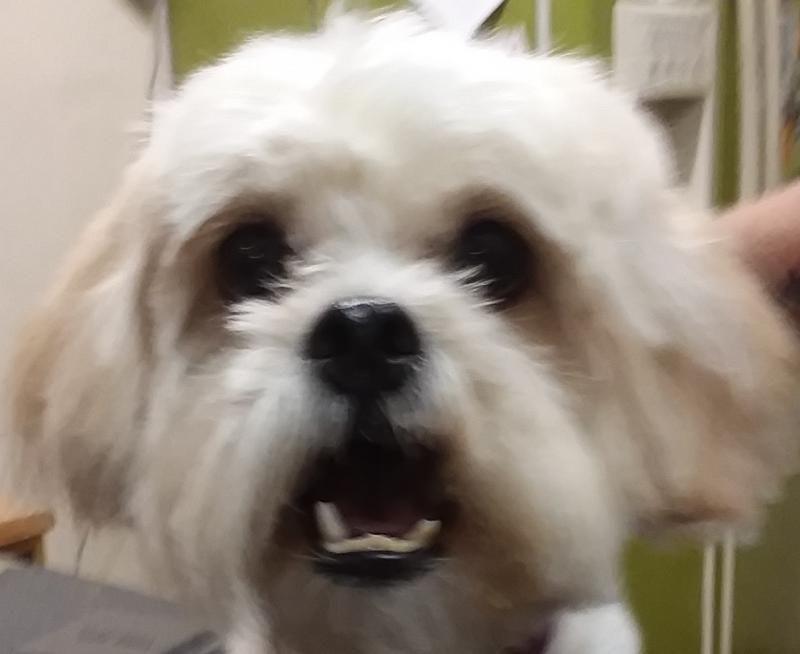 Puppies for adoption near tucson