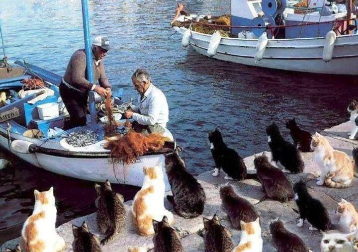 Cats waiting for the day's catch