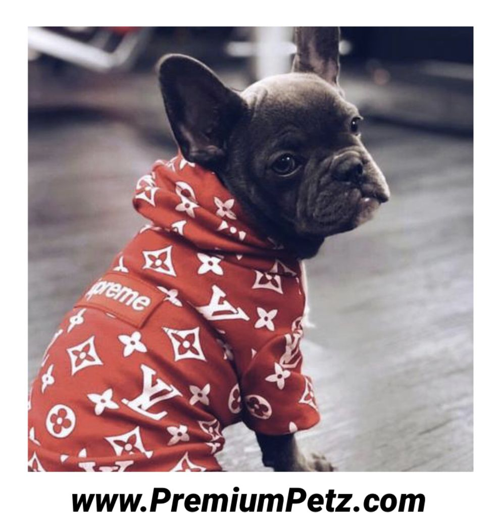 Dog Swag Collection Dog Style Clothing Puppy Swag Apparel Doggy Swag Shop Dog Clothes Boy Dog Clothes Dog Hoodie [ 1028 x 986 Pixel ]