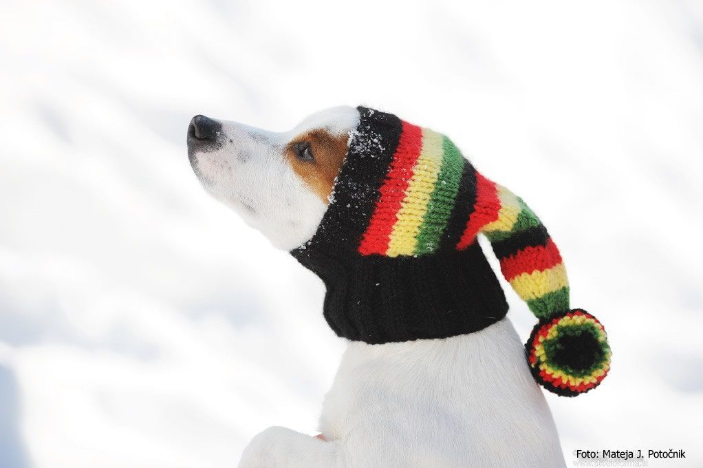 Dog Hat / Hand Knit Dog Hat / Rasta Hat | Dog and Doggies