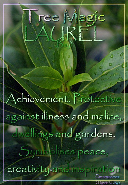 LAUREL (Bay) Achievement. Protective against illness and malice; dwellings and gardens. Symbolises peace, creativity and inspiration