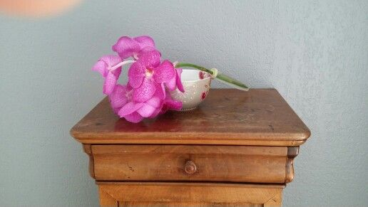 Orchidée ♡