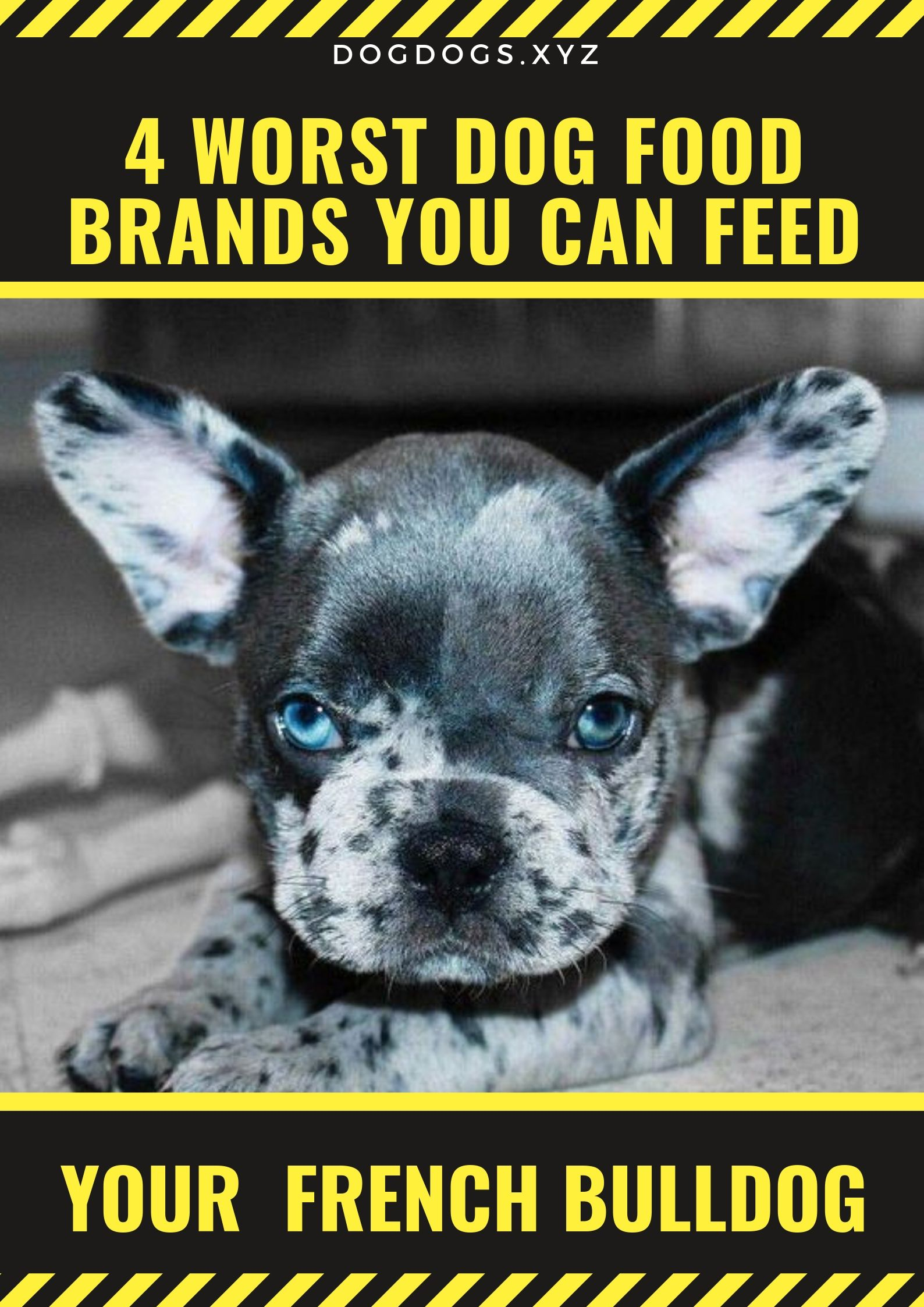 4 Dog Food Brands To Avoid French Bulldog