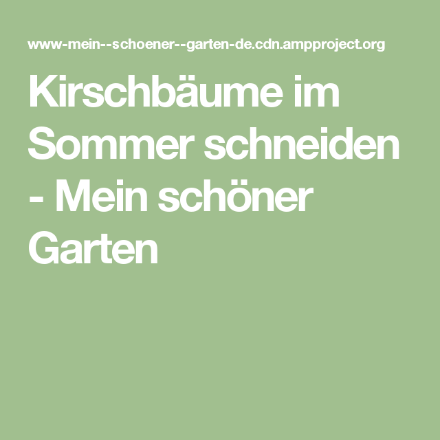 Kirschbaume Im Sommer Schneiden Mein Schoner Garten Garten