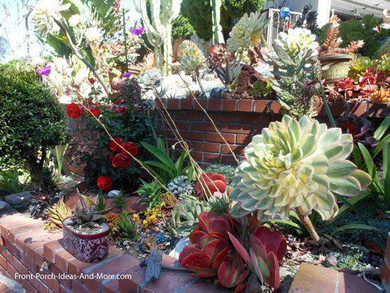 Genial Succulent Garden Designs