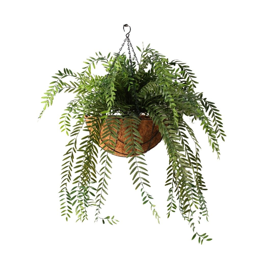 Double columea vine 66cm in hanging basket | Wyer Haus Bar ...