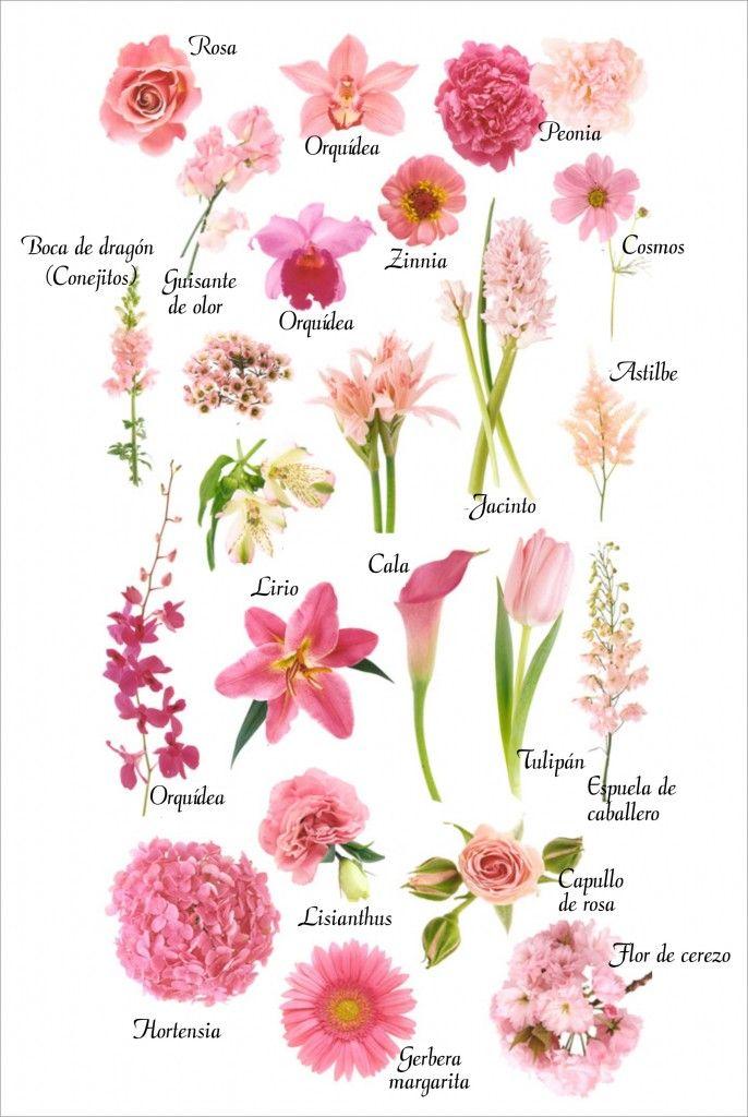 Flores De Color Rosa Jardineria Pinte