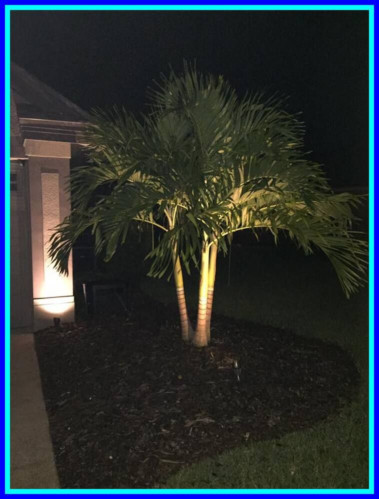 54 Reference Of Palm Tree Landscape Lighting In 2020 Palm Trees Landscaping Outdoor Landscape Lighting Landscape Lighting