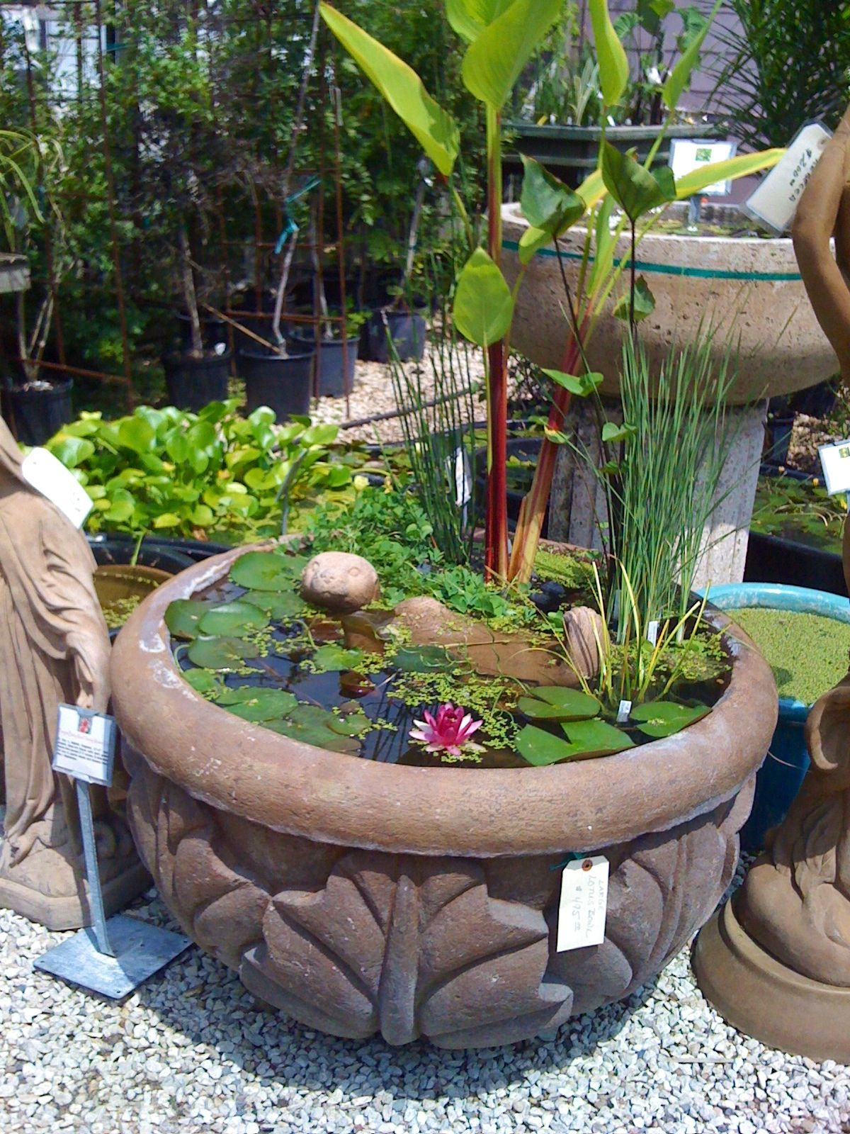 a small pond for a patio or yard. another view of the beautiful lotus bowl i posted earlier. every plant in the bowl had been left in its original one gallon black pot with soil. the pots were topped with gravel so the fish couldn't root out the plants with their little snouts. the pots were placed on bricks stacked to provide different heights for the plants depending on their depth requirements. this lotus bowl was a joy to make and I loved to look at it every day...if you would like a…