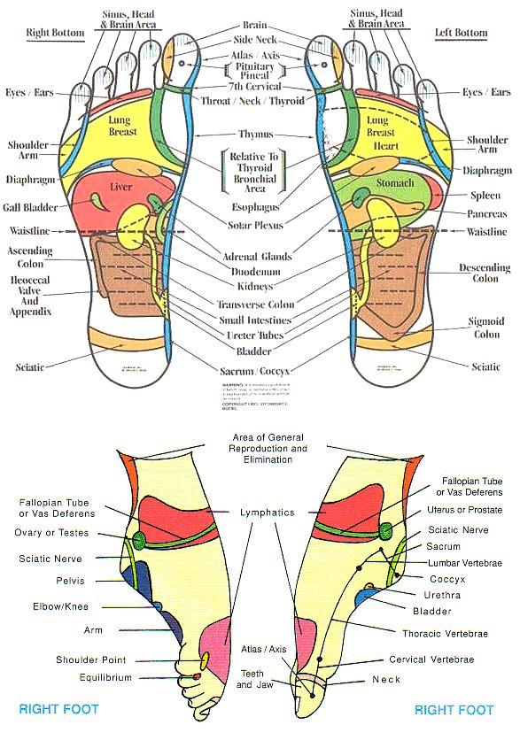 Reflexologychart Head To Feet Reflexology Foot Chart Health