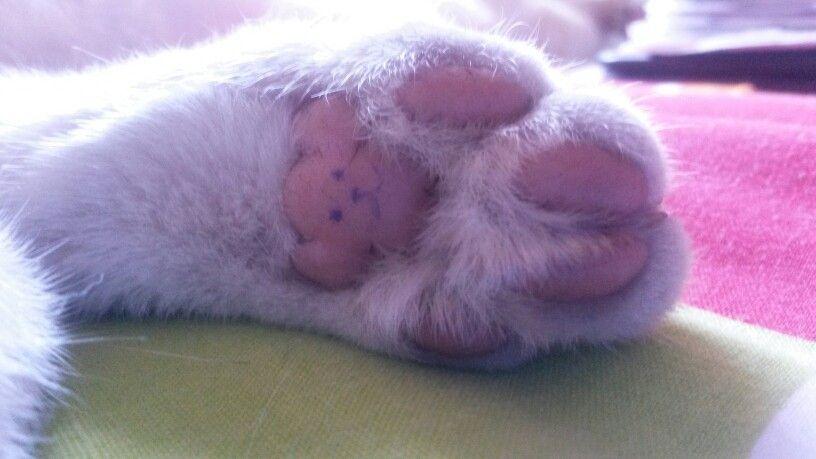 Teddy Bear Cat Paw Cute Bear Paws Cat Paws Teddy Bear