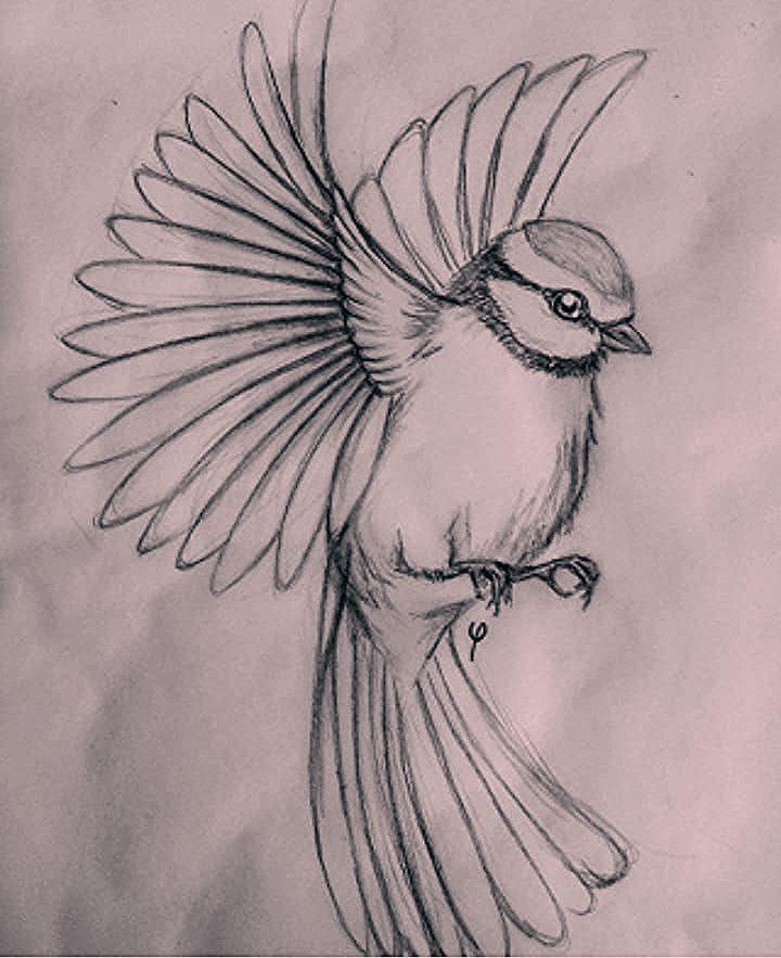40 Free & Easy Animal Sketch Drawing Information & Ideas - Brighter Craft #pencil #pencildrawings #pencilart #drawings #drawingtips #drawingtutorial #drawingideas #drawingchallenge #naturedrawing #art #artsketches #artdrawings #sketching #sketches