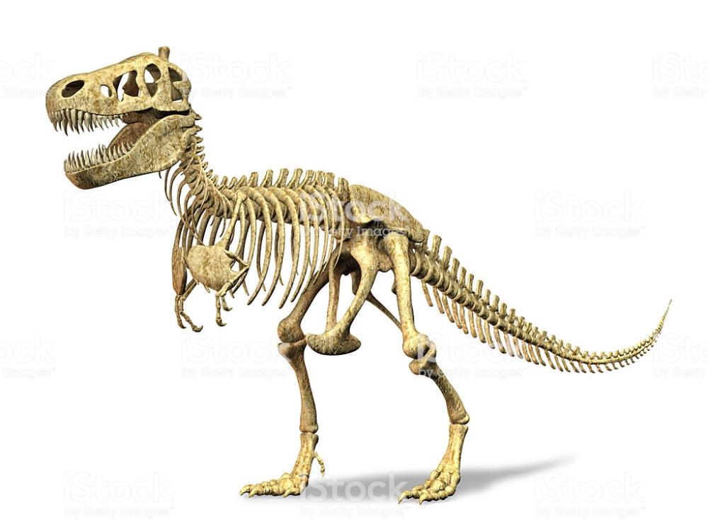 T Rex Skeleton On White Background Clipping Path Included Dinosaur Images Dinosaur Skeleton Dinosaur Fossils