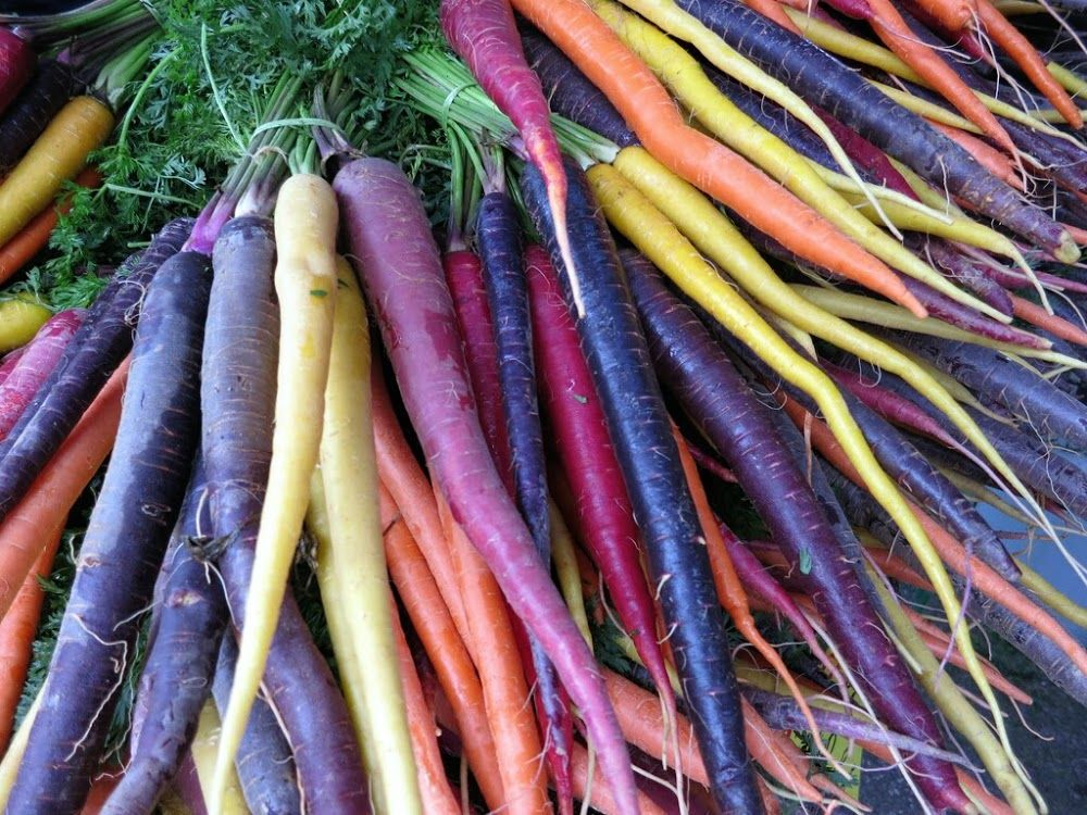 Colorful! (With images) Fall vegetables