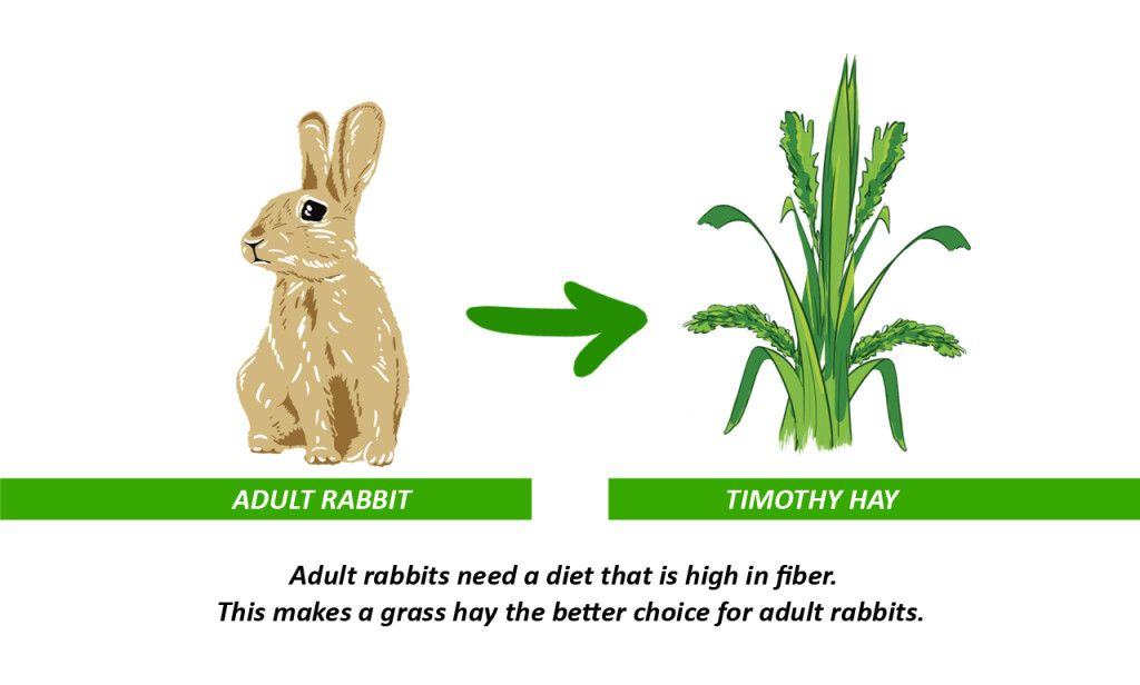 Timothy Hay Nature's small pet superfood Rabbit diet