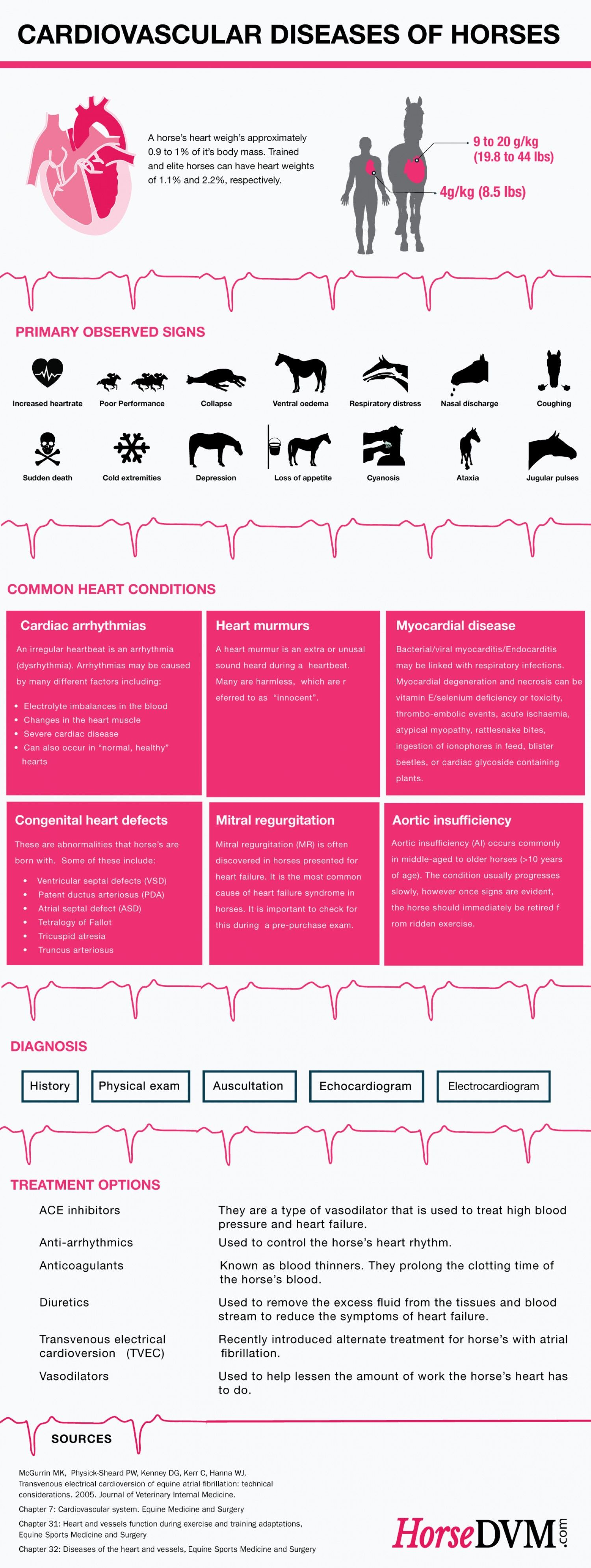 Cardiovascular Diseases of Horses Infographic by HorseDVM