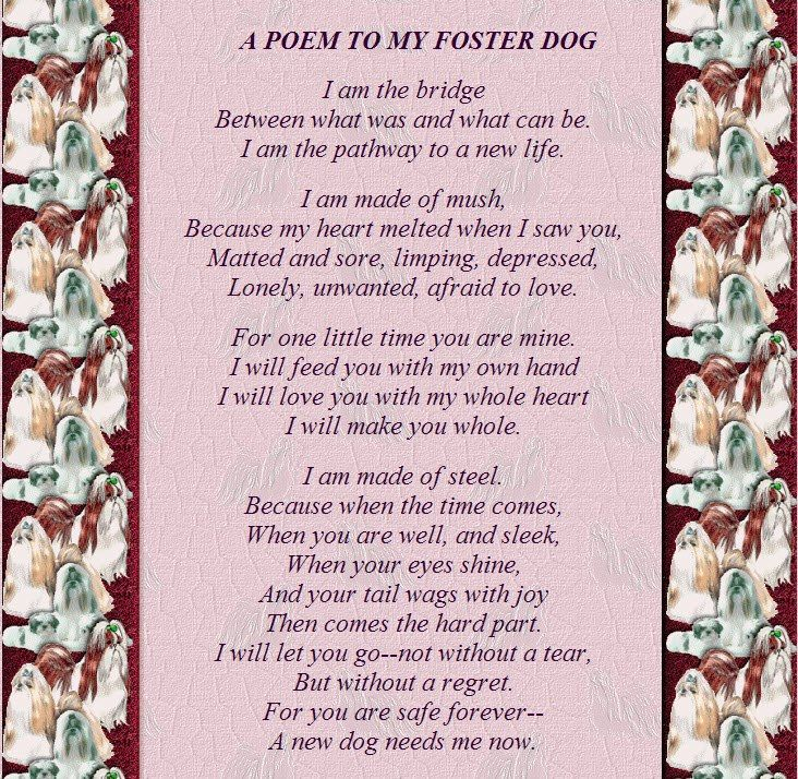 A poem to my foster dog