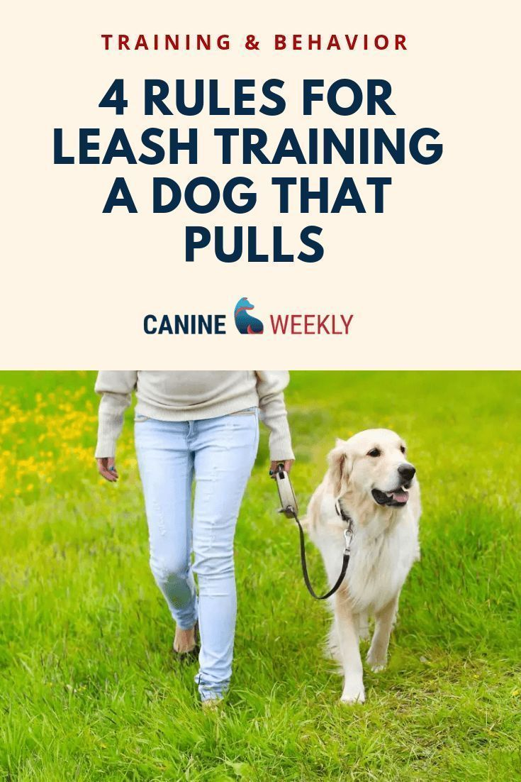 How To Leash Train A Puppy And Stop That Pulling Leash
