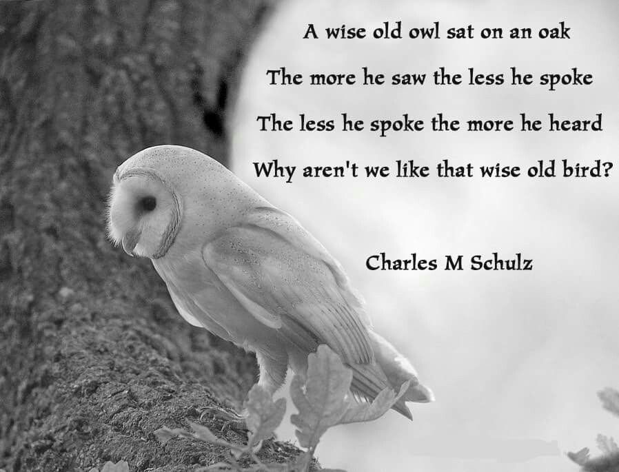 Wise Old Owl Wisdom Quotes Owl Quotes Wise Quotes