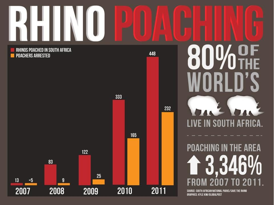 rhino poaching facts essay The iapf website uses cookies to improve your experience we'll assume you're ok with this, but you can opt-out if you wishaccept read more.
